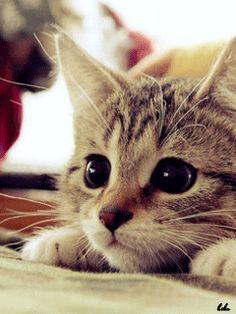 Meow~ Cute kitty~