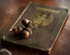 acorns and old books