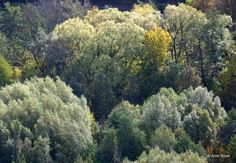 woods in fall 2015 @Thüringer Wald, Germany - by Anie Rose