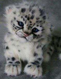 Snow leopard cub - your daily dose of funny cats - cute kittens - pet memes - pets in clothes - kitty breeds - sweet animal pictures - perfect photos for cat moms Cute Wild Animals, Baby Animals Super Cute, Baby Animals Pictures, Cute Little Animals, Cute Animal Pictures, Adorable Animals, Jungle Animals, Animals Images, Beautiful Cats