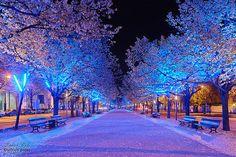 love winter & winter lights.