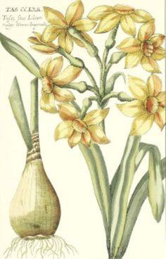 Daffodils  Cross stitch pattern pdf format by diana70 on Etsy, $6.50