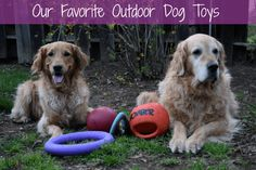 Looking for some great dog toys for Summer fun? Check out this list of our favorite outdoor dog toys!