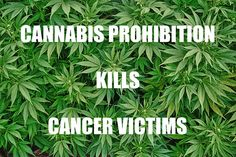 Despite 123 scientific studies showing cannabis' use against cancer, sadly millions suffer and die due to misled prohibition