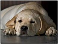 let me sleep...please?