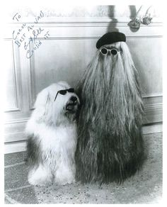 Easy Halloween hairstyles for those last-minute costume party invites: Cousin Itt. Cousin It Adams Family, The Addams Family 1964, Addams Family Tv Show, Addams Family Costumes, Charles Addams, Tv Movie, Carolyn Jones, The Munsters, Black And White Dog