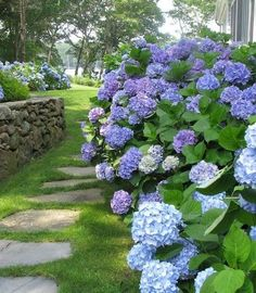 Hydrangea Lines garden paths Hydrangea Landscaping, Plants, Beautiful Backyards, Shade Garden, Gorgeous Gardens, Secret Garden, Outdoor Gardens, Garden Landscaping, Beautiful Gardens