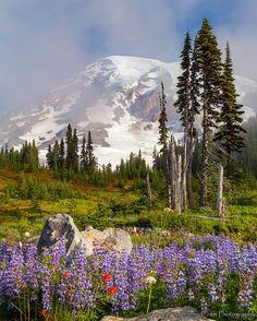 ***Blooming alpine meadows (Mt Rainier, Washington) by Jeremy Cram