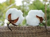This site is WONDERFUL!!!!! Thank goodness I found somewhere where I can buy cotton!