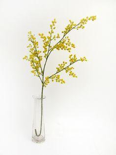 Buy Flowers Online Same Day Delivery Une Branche De Mimosa Botanical Drawings, Botanical Prints, Spring Blooms, Spring Flowers, Yellow Flowers, Silk Flowers, Flower Of Life, Flower Art, Flor Tattoo