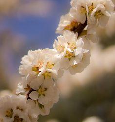 Spring Time I love spring <3