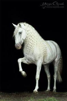 Heart of Horse