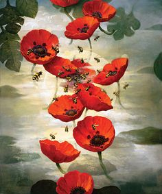 kevin sloan bees