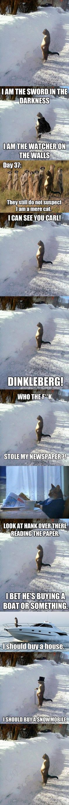 Best of Snowbank Cat. This made me laugh way harder than it should have.