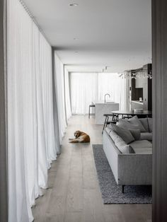 Bayside House Sees Adam Kane Architects Focus Attention On Durability And Robustness, Creating A Foundation For Its Growing Young Family. Design Thinking, Timber Flooring, Hardwood Floors, Floor Design, House Design, Gable House, Design Jardin, Design Blogs, Design Design