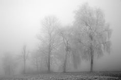 fog II - null