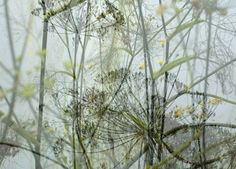 "Kath Williamson, ""Grass Verge"" / Images of Nether Edge"