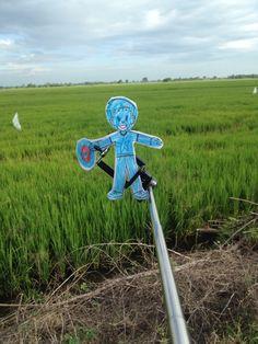 Paddy field....