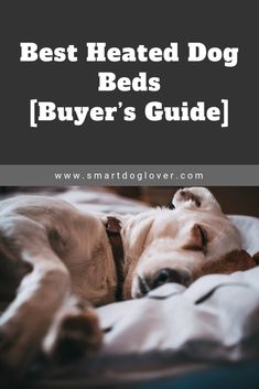 Ever heard of heated dog beds? Best heated dog beds not only keep older dogs warm but also help relieve arthritis pain and alleviate joint discomfort. Best Dog Training Books, Heated Dog Bed, Outdoor Dog Bed, Bolster Dog Bed, Body Heat, Dog Beds, Dog Houses, Warm And Cozy, Fur Babies
