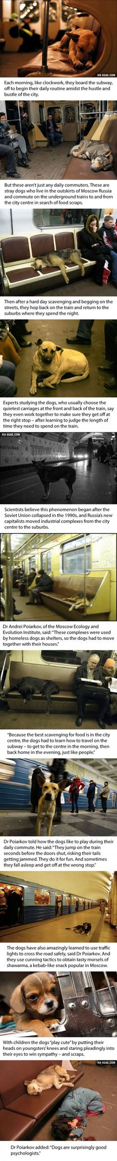 Dogs in Russia