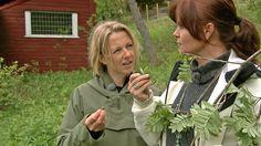 Ellen-Beate Wollen får Hanne Cecilia Aass til å smake på rogneblader. Og så lager de iskrem med rognebladsmak