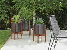 Case Study Planters with Walnut Stand