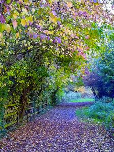 Take me back to the leafy lanes of England. This one is in Watermead Country Park, Leicestershire, England. Beautiful World, Beautiful Places, Parcs, Belle Photo, Pretty Pictures, Amazing Pictures, Pictures Of Spring, Beautiful Nature Pictures, Amazing Nature