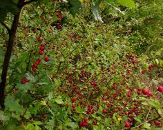 Une forêt comestible pour atteindre l'auto-suffisance alimentaire    https://www.bastamag.net/Une-foret-comestible-pour-atteindre-l-auto-suffisance-alimentaire