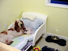 Good Idea for doggie bed!