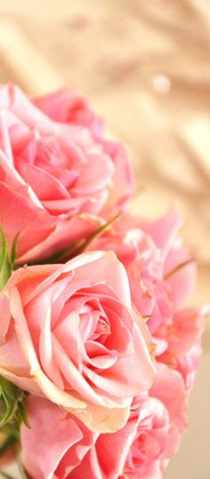 Colorful Flowers, Pretty In Pink, Pink Flowers, Beautiful Flowers, Spring Theme, Spring Colors, Flower Pictures, Pretty Pictures, Tulips
