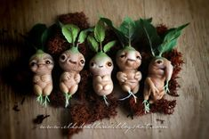 baby mandrake roots (think Harry Potter)  so ugly they're cute!!