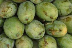 ¿Puedo cultivar una planta de mango como una planta doméstica? | eHow en Español