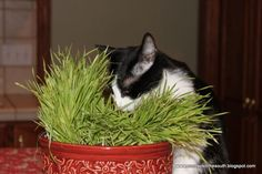 How to distract your cat from eating your houseplants. - Capper's Farmer Magazine