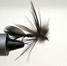 Sparrow Nymph Black