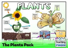 Discover the wonderful world of plants with our fantastic collection of teaching, activity and classroom display resources. Includes a child-friendly guide to plant growth, pollination, photosynthesis, classification, adaptation and much more! Science Curriculum, Science Resources, Teacher Resources, Teaching Ideas, Plant Classification, Seed Dispersal, Parts Of A Plant, Plant Growth, Classroom Displays