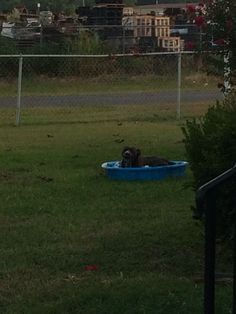 Ace taking a dip!