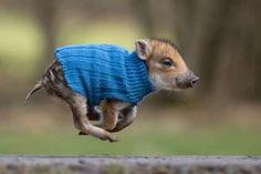 I know I can touch the sky--I CAN, I CAN, I CAN!!!   - Animal Press/Barcroft Media via Getty Images