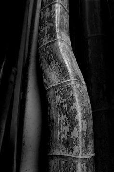 竹虎四代目がゆく!「またひとつ、驚きの竹」  竹虎 虎斑竹専門店竹虎 図面竹 竹 竹材 bamboo TAKETORA