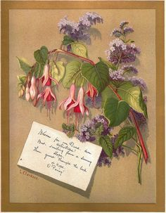 Antique PRINT - 'FUCHSIA & HELIOTROPE' ~ Victorian Chromolithograph c.1880s @rubylanecom #rubylane #VintagePrint