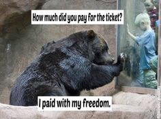 Please boycott ALL animal attractions and urge your friends and families to do the same.  Animals should not be exploited and kept in cruel conditions.  They deserve their freedom just like the human animal.