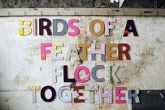 Birds of A Feather Flock Together! Cute saying!