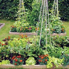 Urban Garden Intensive Gardening: Grow More Food in Less Space from MOTHER EARTH NEWS - Blend the best principles of biointensive gardening and square-foot gardening to devise a customized, highly productive intensive gardening system. Potager Garden, Veg Garden, Edible Garden, Garden Beds, Vegetable Gardening, Hydroponic Gardening, Summer Garden, Marigolds In Garden, Veggie Gardens