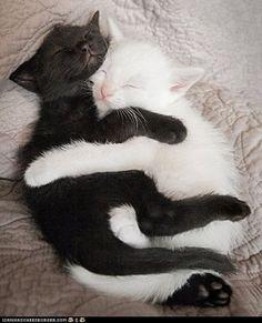 cute black cat - Google Search