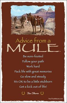 Spirit animal totem advice from a mule.