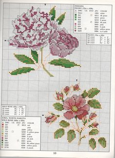 STATE FLOWERS (bbj0086) Indiana & Iowa, N. Dakota 1/1