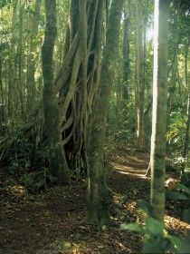 Mount Bithongabel: Lamington National Park boasts extensive walking tracks along the McPherson Range, which allow visitors to explore the area's forests, creeks and waterfalls. Dramatic lookouts afford views over the Gold Coast, south-east Queensland and northern...