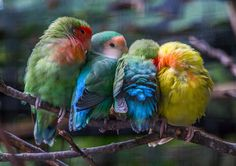 """Cuddle Birds"" ~ by Evan Bell ~ Miks' Pics ""Fowl Feathered Friends lV"" board @ http://www.pinterest.com/msmgish/fowl-feathered-friends-lv/"