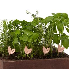 Look what I found at UncommonGoods: sprout herb markers - set of 4... for $35 #uncommongoods
