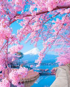 Mount Fuji, Japan Photo by Photo Japon, Japan Photo, Beautiful Nature Wallpaper, Beautiful Landscapes, Beautiful World, Beautiful Places, Landscape Photography, Nature Photography, Landscape Art