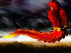 Wallpprs is the world's largest collection of Free HD Red parrot artwork Wallpapers. 3d Desktop Wallpaper, Phoenix Wallpaper, Blush Wallpaper, Cool Wallpaper, Desktop Wallpapers, Wallpaper Free Download, Wallpaper Downloads, Parrot Image, 1366x768 Hd